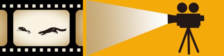 甑島の動画